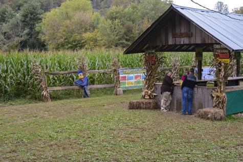 Milton corn maze celebrates 15 years