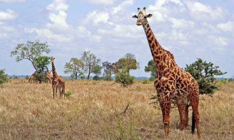 Travels in Tanzania