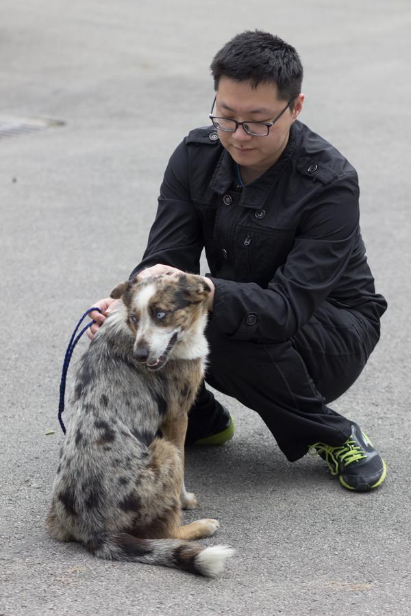 INTO student Bob gives a dog a chance to stretch their legs outside the Huntington Cabell Wayne Animal Control Shelter, April 11, 2016.