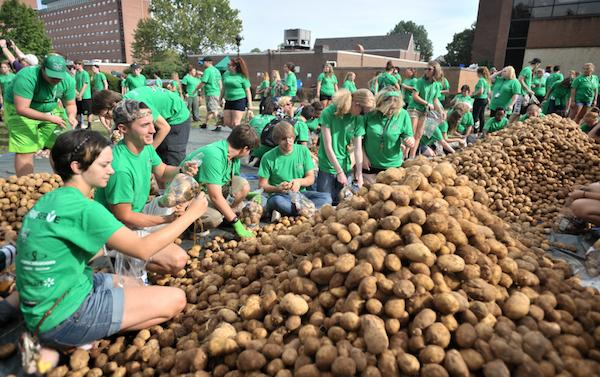 Students package two truckloads of potatoes during the Thundering Serve Potato Drop on Buskirk Field, September 16, 2016. The potatoes will be donated to Facing Hunger Food Bank.