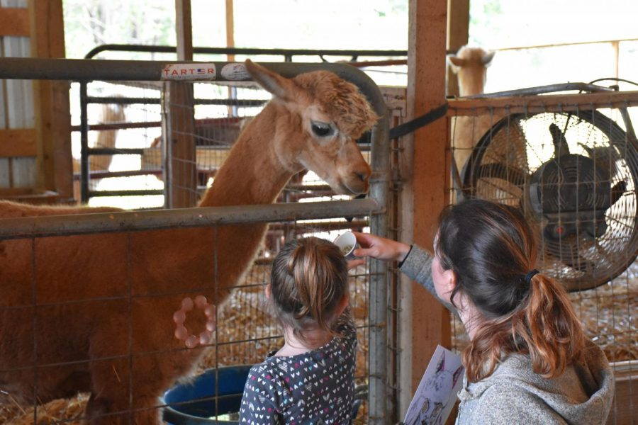 National Alpaca Farm day at Merritt's Farm in Barboursville