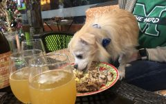 Local business creates a happy hour with pets to support animal rescue groups