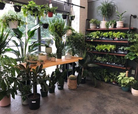 Local Plant Shop Continues to Grow