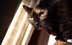 Parthe-Pet: Cookie